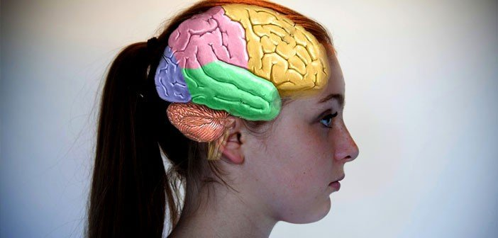 https://dam.tbg.com.mx/http://i.muyinteresante.com.mx/dam/ciencia/15/09/Brain-photo-by-AmenClinic-dot-com-Creative-Commons-702x336.jpg.imgo.jpg