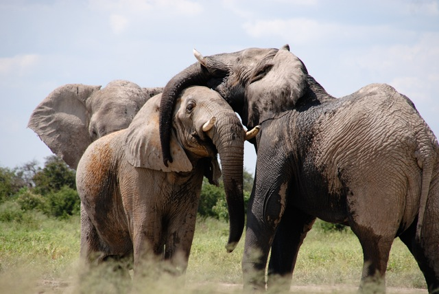 https://dam.tbg.com.mx/http://i.muyinteresante.com.mx/dam/naturaleza/16/09/15/africa-elephant-words-animal.jpeg.imgo.jpeg