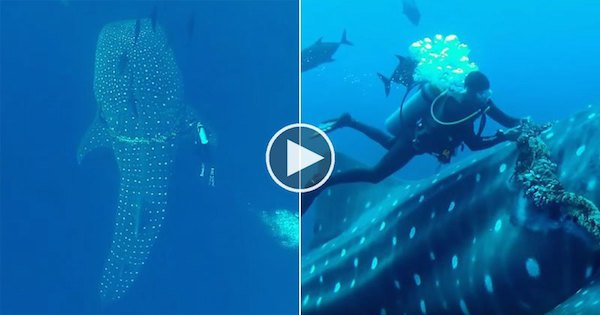 https://tved-prod.adobecqms.net/http://i.muyinteresante.com.mx/dam/video/16/02/22/diver-cuts-fishing-rope-off-of-whale-shark.jpg.imgo.jpg