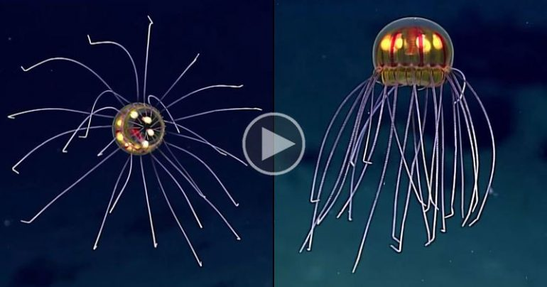 https://tved-prod.adobecqms.net/http://i.muyinteresante.com.mx/dam/video/16/05/4/rare-and-mysterious-jellyfish-spotted-12000-ft-deep1.jpg.imgo.jpg