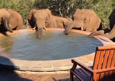 https://dam.tbg.com.mx/http://i.muyinteresante.com.mx/dam/video/16/06/9/that-moment-when-you-wake-up-to-a-herd-of-elephants-drinking-out-of-your-pool.jpg.imgo.jpg
